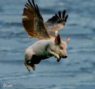 20090505102603-cerdo-volando.jpg